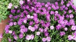 道端の花その2 WEB用